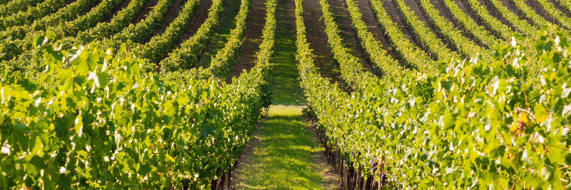 wine country cocktail vineyard grape vines boutique hunter valley pokolbin lovedale